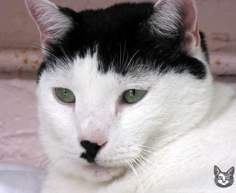 http://www.catsthatlooklikehitler.com/kitler/pics/kitler2139.jpg