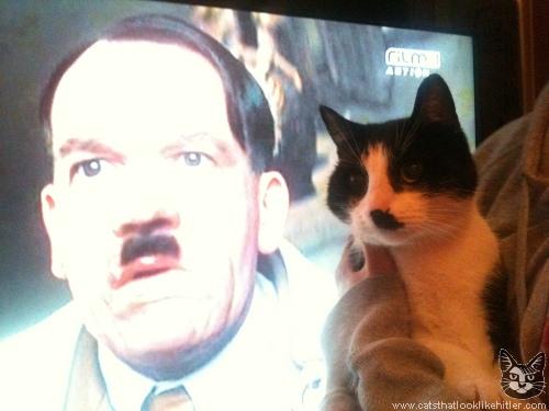 http://www.catsthatlooklikehitler.com/kitler/pics/kitler5364.jpg
